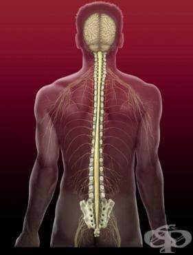 Увреждания на гръбначния мозък при спортисти - изображение