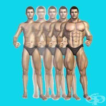 Тренировъчна програма за хипертрофия на мускулите при начинаещите - изображение