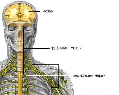 Увреда на периферните нерви при спортисти - изображение