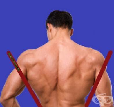 Тренировъчна програма за V-образна горна част на тялото - изображение