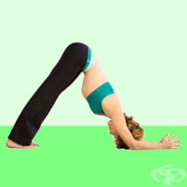 Йога поза Делфин - изображение