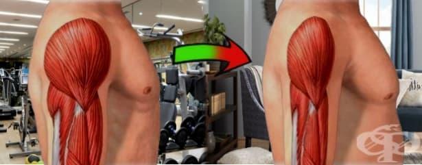 Колко бързо се губи мускулна маса след спиране на тренировките - изображение