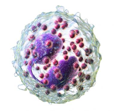 Ниско ниво на гранулоцити в кръвта - изображение