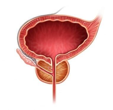 Симптоми свързани с простатата - изображение