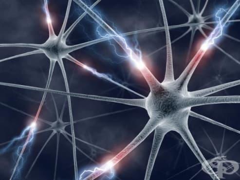 Електромиография (ЕМГ) и нервна проводимост - изображение