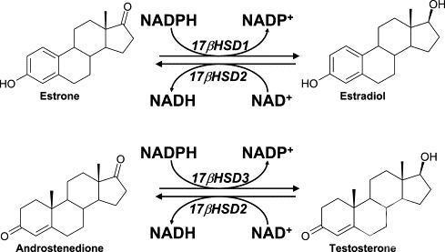 17-кетостероиди - изображение