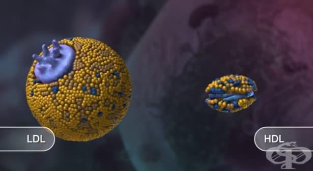 Изследване на HDL-холестерол - изображение