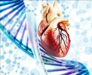 Генетични изследвания при сърдечно-съдови заболявания - изображение