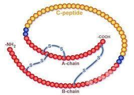 C-пептид - изображение