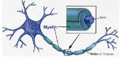 Миелин базичен протеин тест - изображение