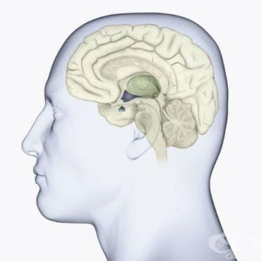 Антидиуретичен хормон - изображение