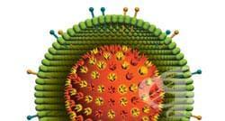 Изследване за антиген на херпесен вирус - изображение