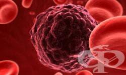Протеин (белтък) в кръвта - изображение