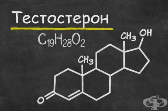 Изследване на тестостерон - изображение