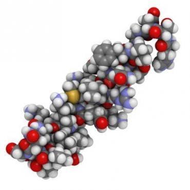 Вазоактивен интестинален пептид - изображение
