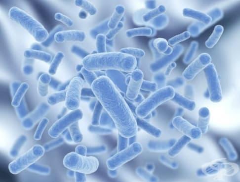 Пробиотици - изображение