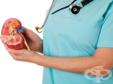Трансплантация на бъбрек - изображение