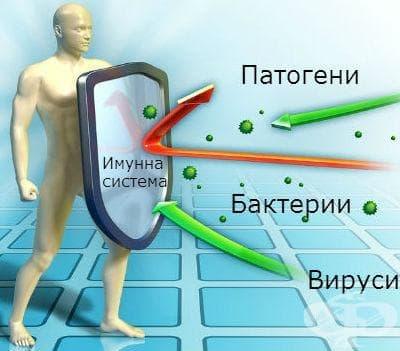 Подсилване на имунната система - имуномодулатори - изображение