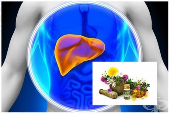 Добавки за здрав черен дроб (хепатопротектори) - изображение