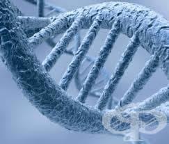 Генетична консултация - изображение