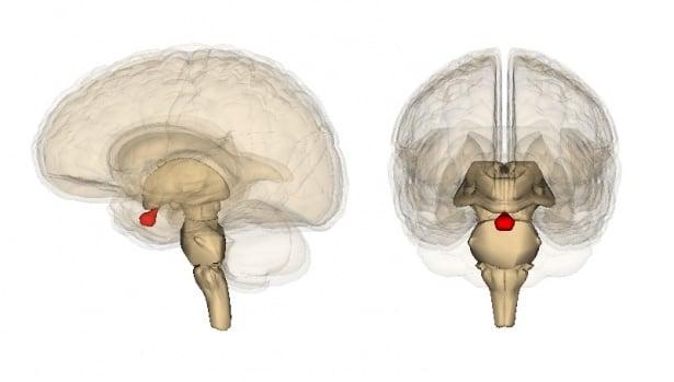 Хормонална терапия при дефицит на растежен хормон - изображение