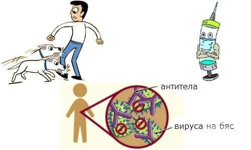 Ваксина срещу бяс - изображение