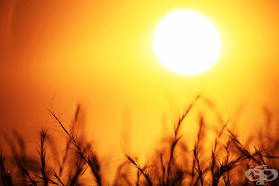 Как да се предпазим от горещите вълни през лятото? - изображение