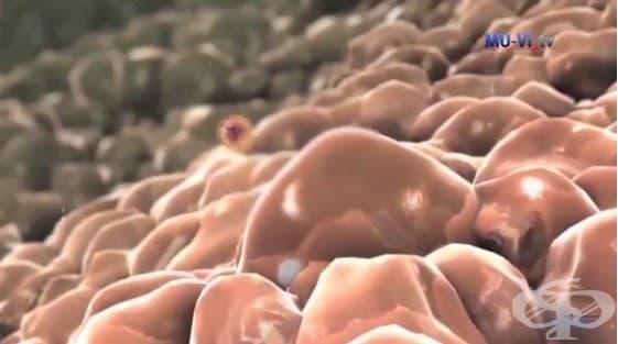 """Как да разпознаем заболяването морбили? - доц. д-р Маргарита Господинова –  ръководител Клиника по инфекциозни болести при УМБАЛ """"Св. Марина"""" – Варна - изображение"""