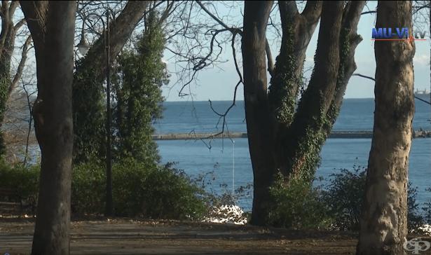 Декември 2019 - Зеленият морски двор на Варна навърши своята първа година - изображение