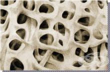 Кои са основните минерали в структурата на костта?